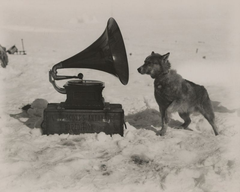 During an expedition of the South Pole, a dog enjoys the gramophone, 1911.jpg