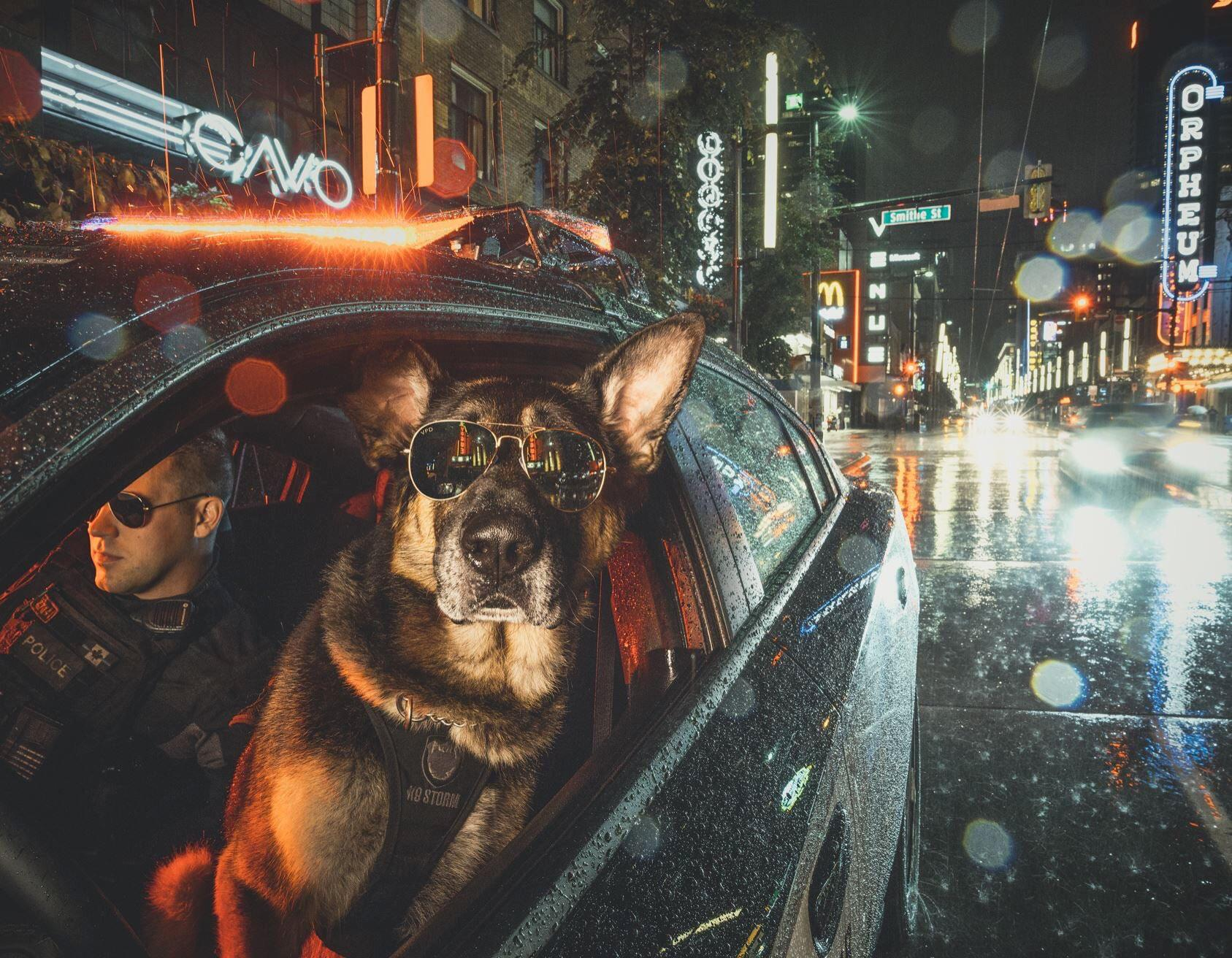 The Vancouver Police Department made a police dog calendar. This badass photo of a K9 and its handler is in it.jpg
