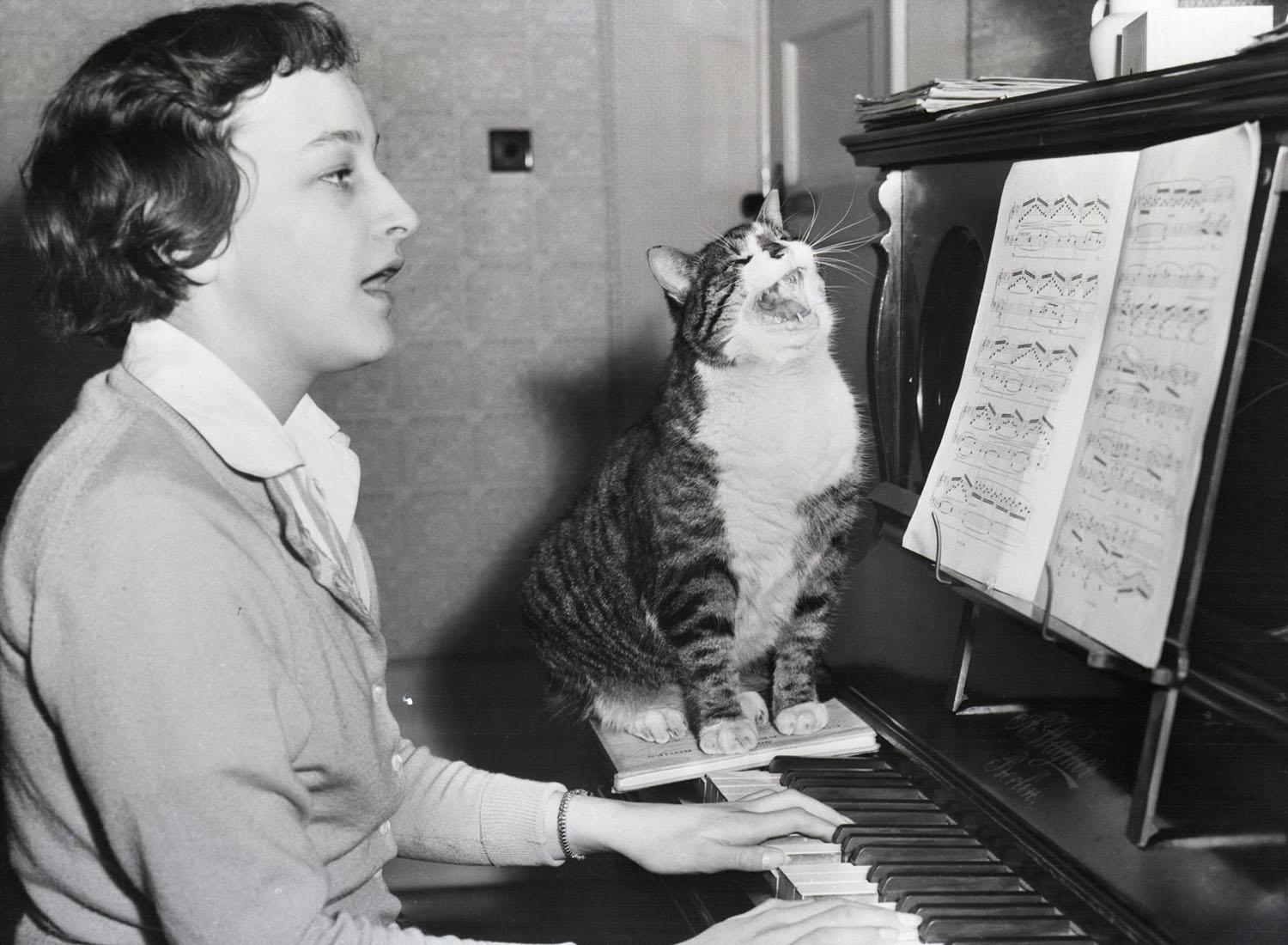 Money the Cat singing while his owner plays the piano. March 23, 1959.jpg