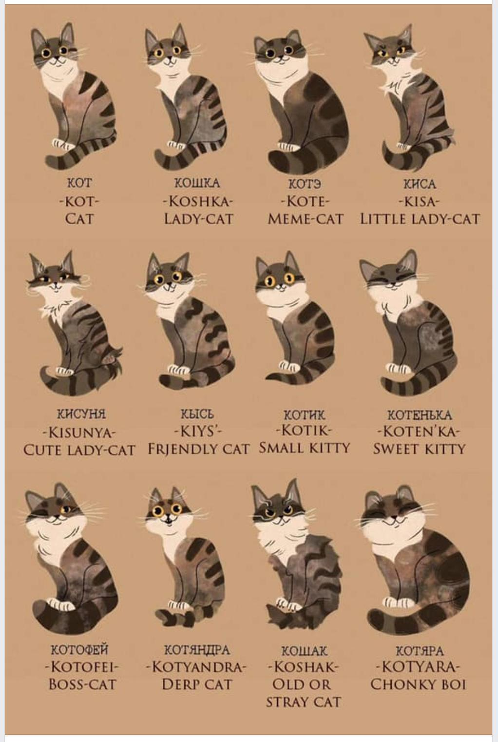 Russian words to describe cats.jpg
